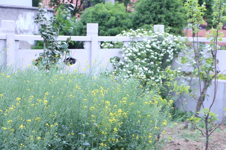 伟诚花园一隅